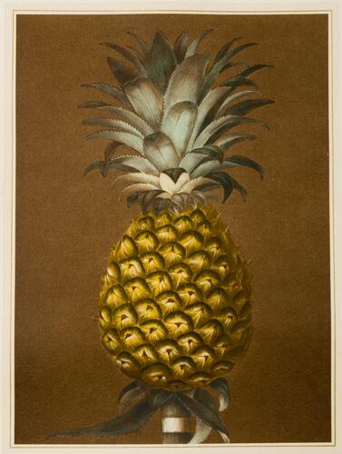 Pineapple B