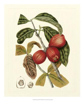Island Fruit 4
