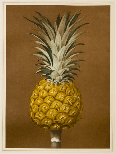 Pineapple A
