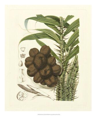 Island Fruit 1