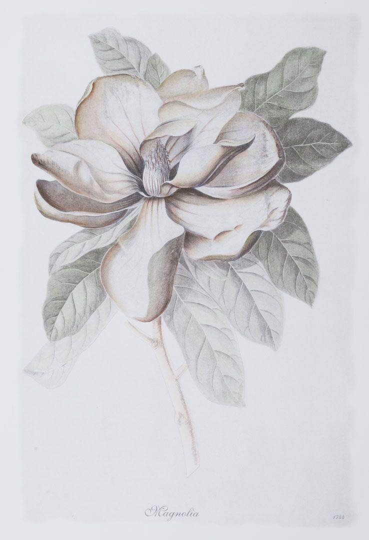 Bulb Botanicals, Magnolia 2