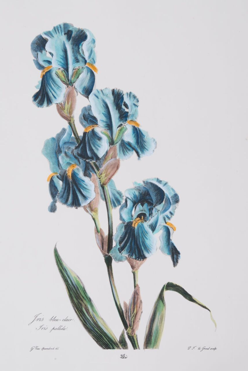 Large Blue Botanical Series (B)