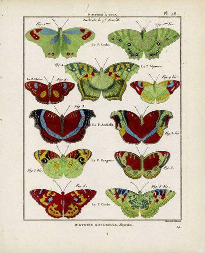 Butterfly Specimen Series, (a)