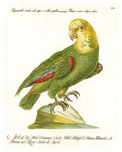 Manetti Parrots, 8