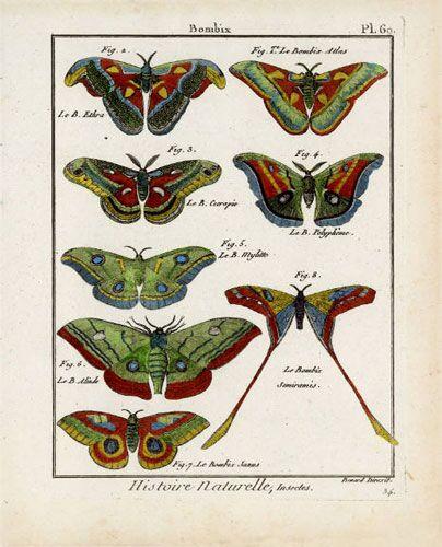 Butterfly Specimen Series, (d)