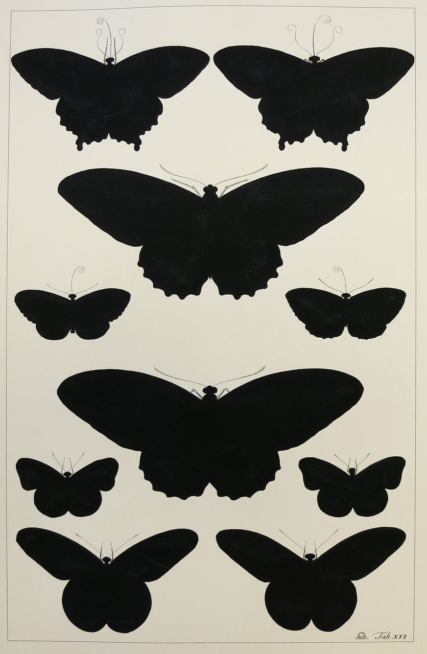 Butterfly Silhouette (a)
