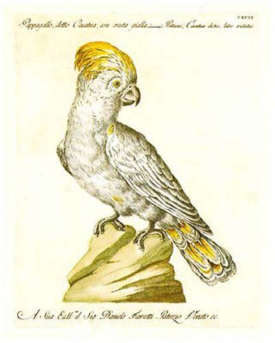 Manetti Parrots, 5