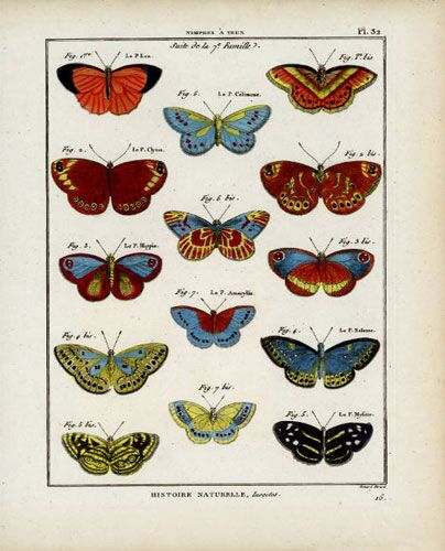 Butterfly Specimen Series (b)
