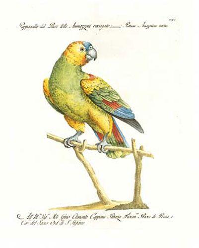 Manetti Parrots, 1