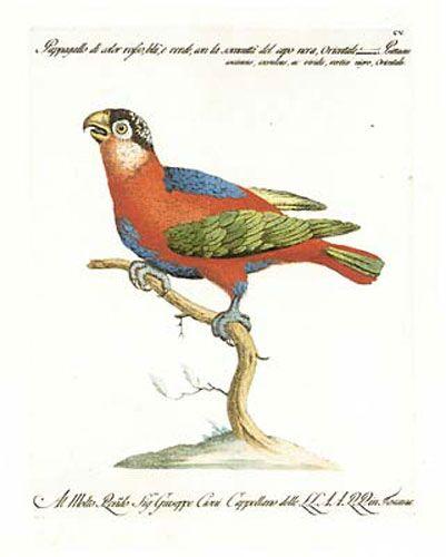 Manetti Parrots, 2