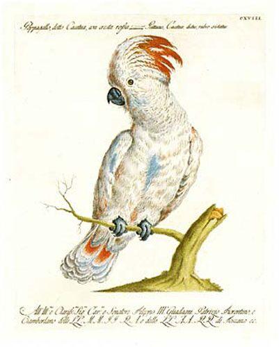 Manetti Parrots, 6