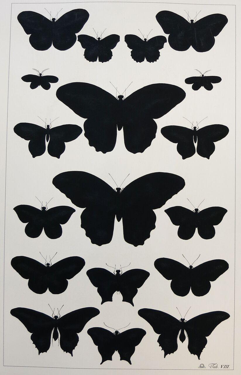 Butterfly Silhouette (b)