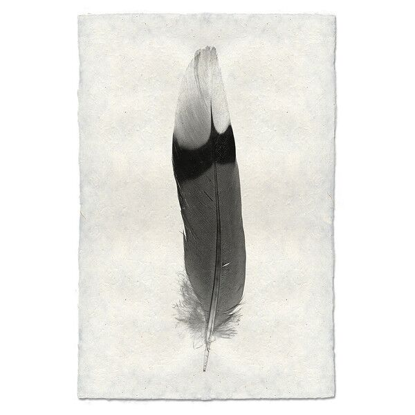 Feather Study, 9