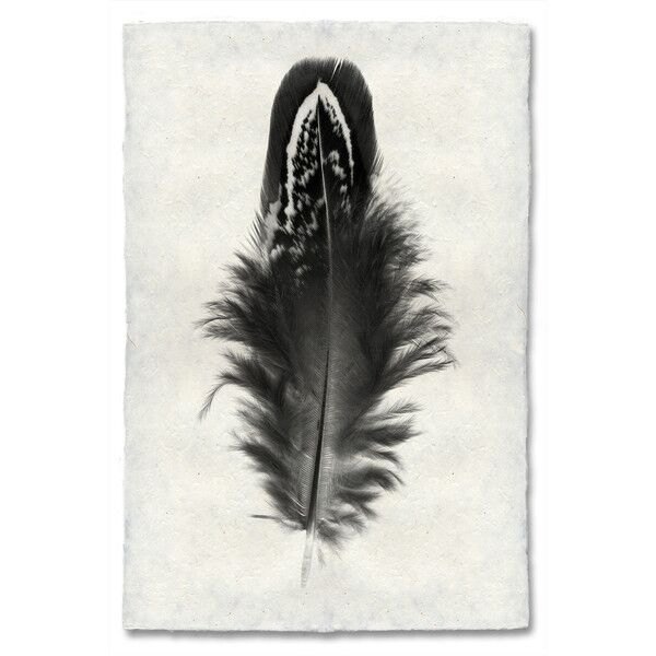 Feather Study, 3