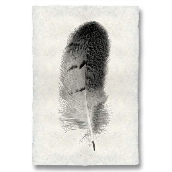 Feather Study, 7