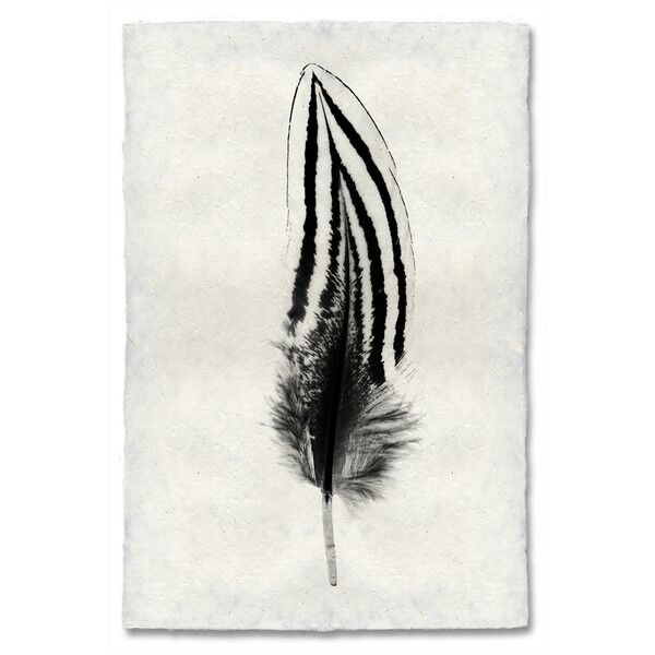 Feather Study, 2