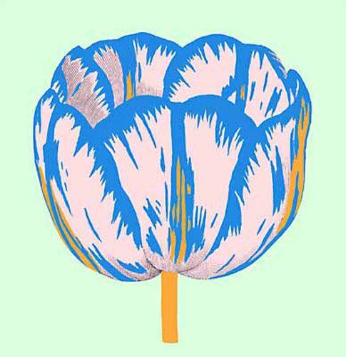 Pop Tulip 2