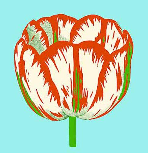 Pop Tulip 3