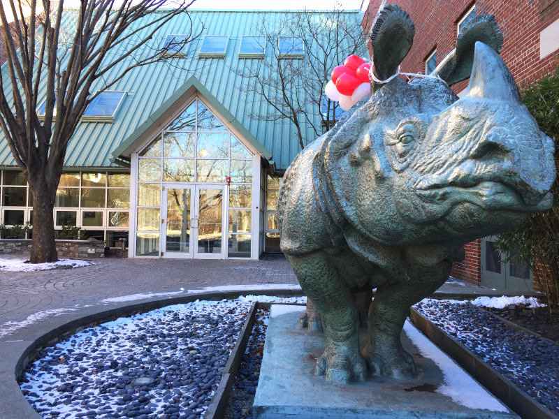 rhinoceros in front of smfa (sonya kovacic)