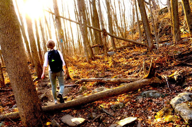 november hike, wachusett mountain (sonya kovacic)