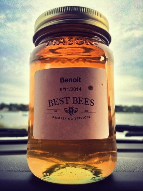best bees(noah-wilson rich)