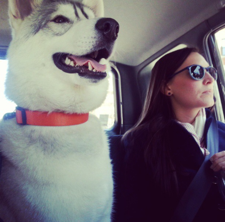 on the way to the arboretum (sonya kovacic)