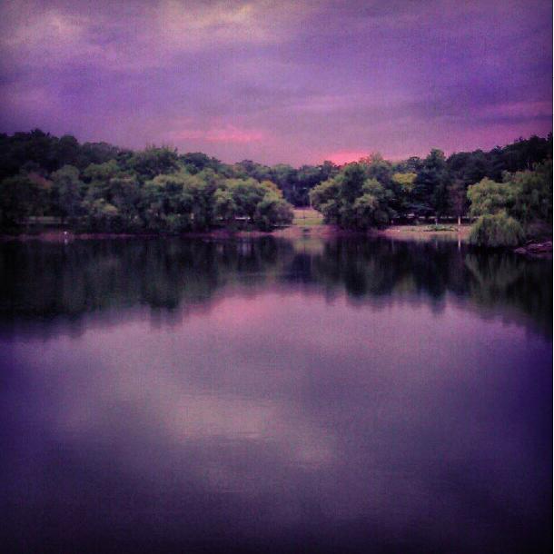 jp pond (sonya kovacic)