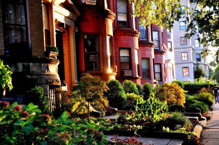 beacon street, brookline  (sonya kovacic)