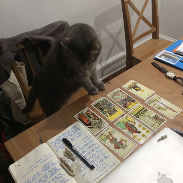 Clover loves tarot just like me.  I can't stand how darling she is sometimes.