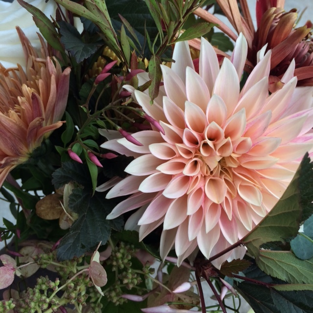 It's easy to fall in love with dahlias.