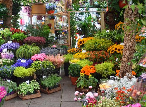 flower-market-of-amsterdam-amsterdam-nl097