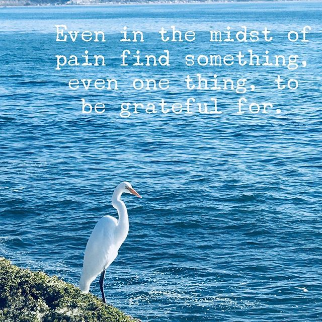 I've counseled hundreds of people in grief. Those who could not find even one thing to be grateful for, in the midst of their pain, became bitter. Please look for literally one simple thing to be grateful for. Much love to you. For more resources, click on my bio. #Griefsupport #Lifeafterloss#Grieving #lossofalovedone #Tragedy #EmotionalWellness #Courageroad #Inspiration #InspirationalQuotes #GriefBooks #givethanksalways