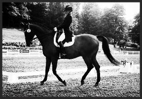 dressagehorse.jpg