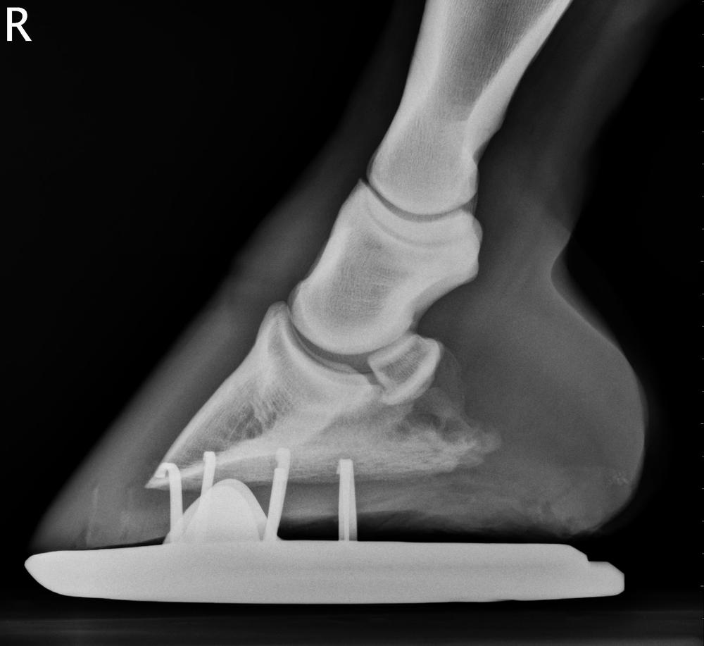 Horse Foot X-ray