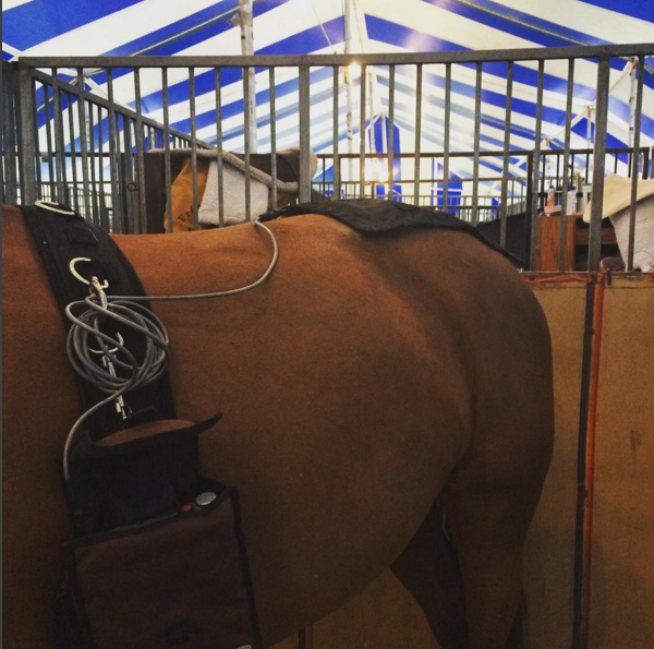 Functional Electrical Stimulation of the horse