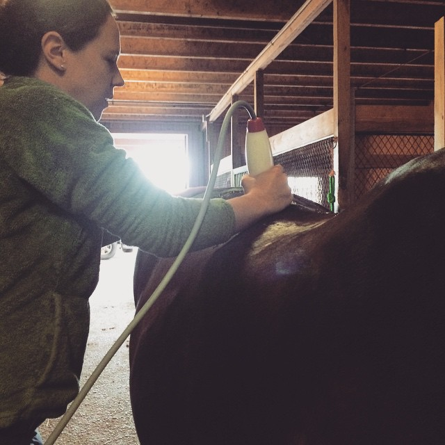 Shockwave therapy on a horse's back