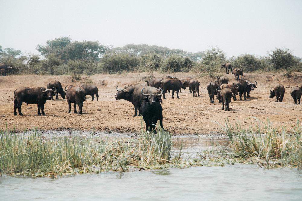 AFRICA-20.jpg
