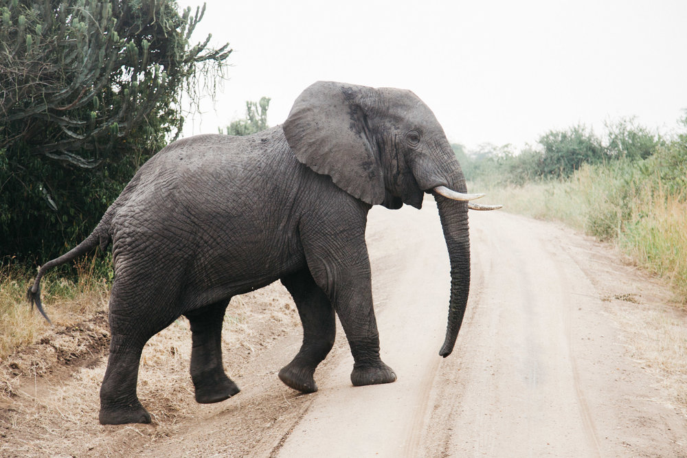 AFRICA-24.jpg