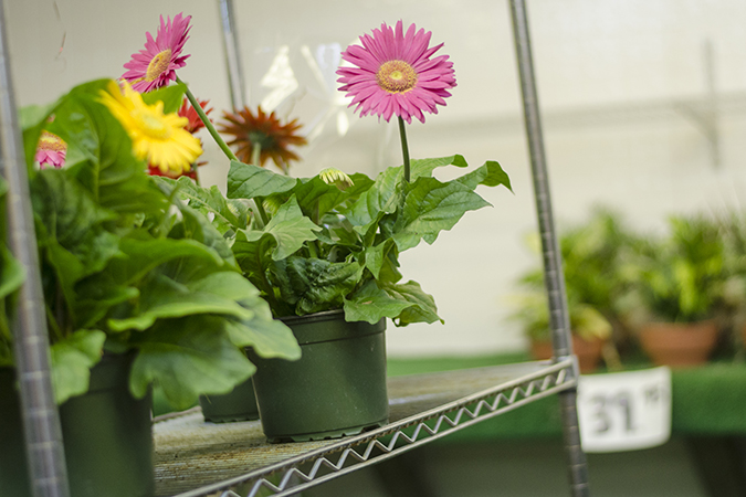 FlowersFruit5.jpg