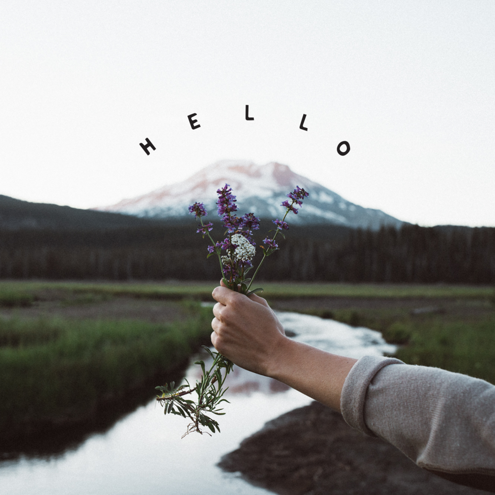 Hello Wildflowers.png