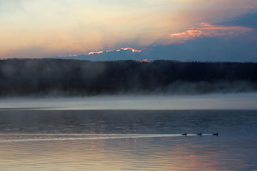 Ducks on Hart Lake at sunrise