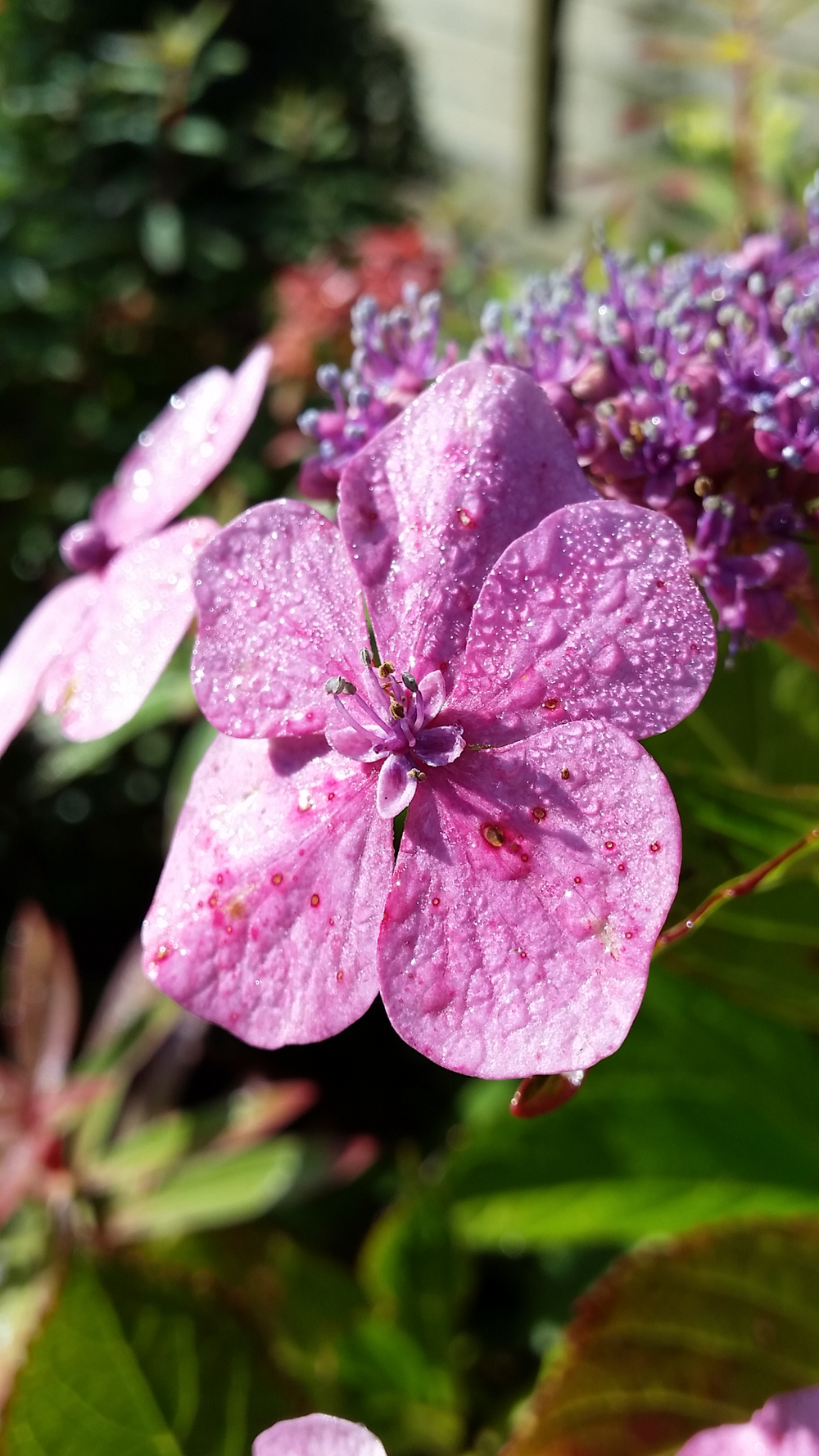 Dewy pink flower.png