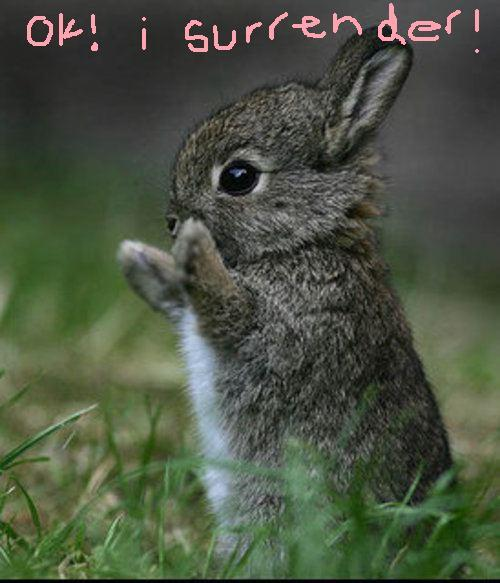 Do it little bunnies of the Universe! xo