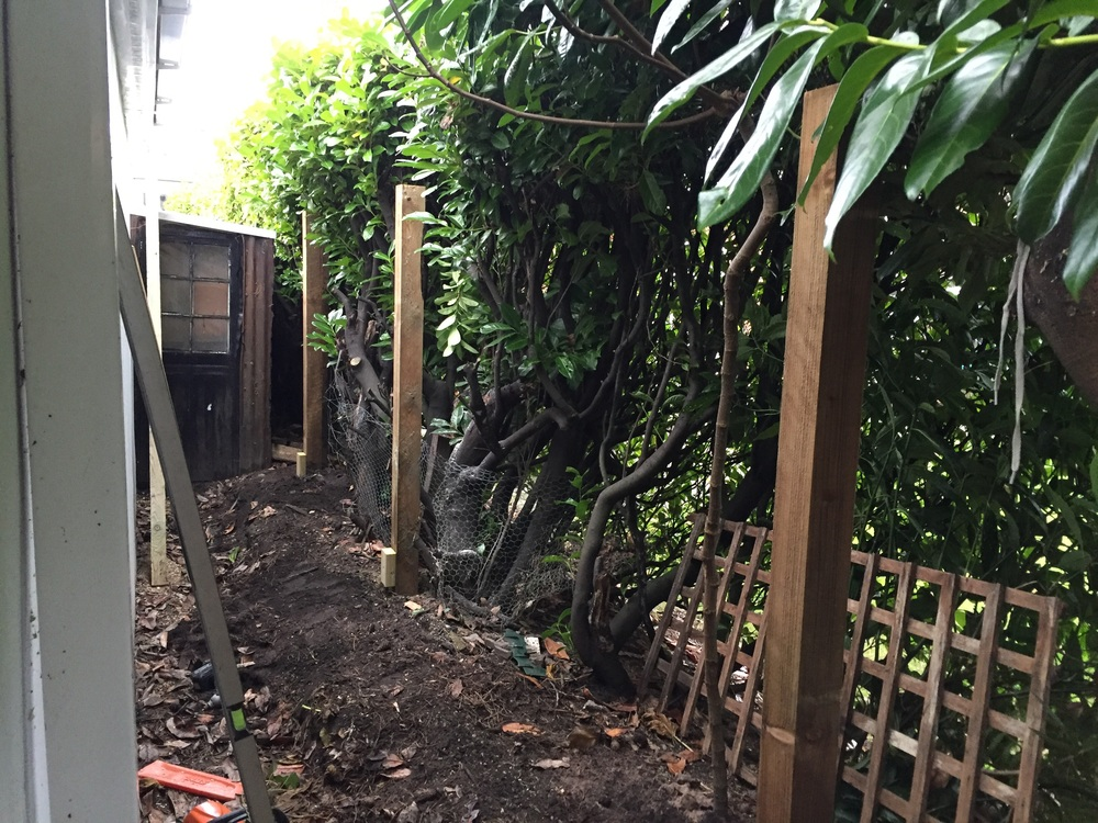 Showing the 4 x 4 timber posts concreted in position.