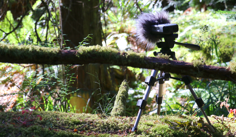 Audio recorder in position at Fillongley National Park, Denman Island, BC, Canada.  photo by Julie Andreyev