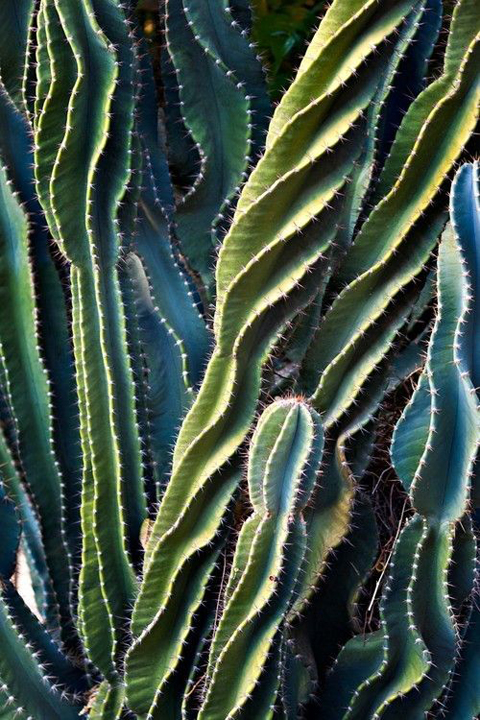 Swirling cacti.