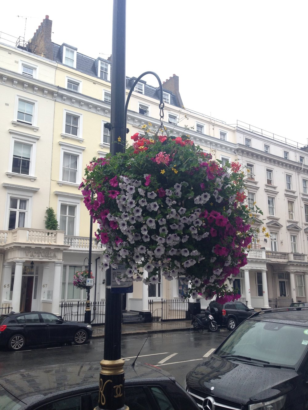 ^  The rain doesn't stop these hanging baskets looking sublimely pretty in Belgrave Road.