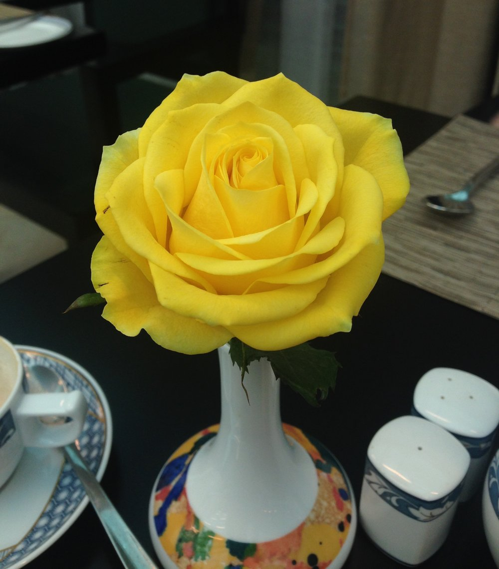 ^  The lovely yellow rose on our table in the breakfast lounge. Just like the roses we gave to Mum & Dad!