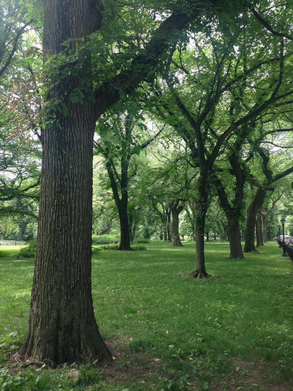 ^ Central Park