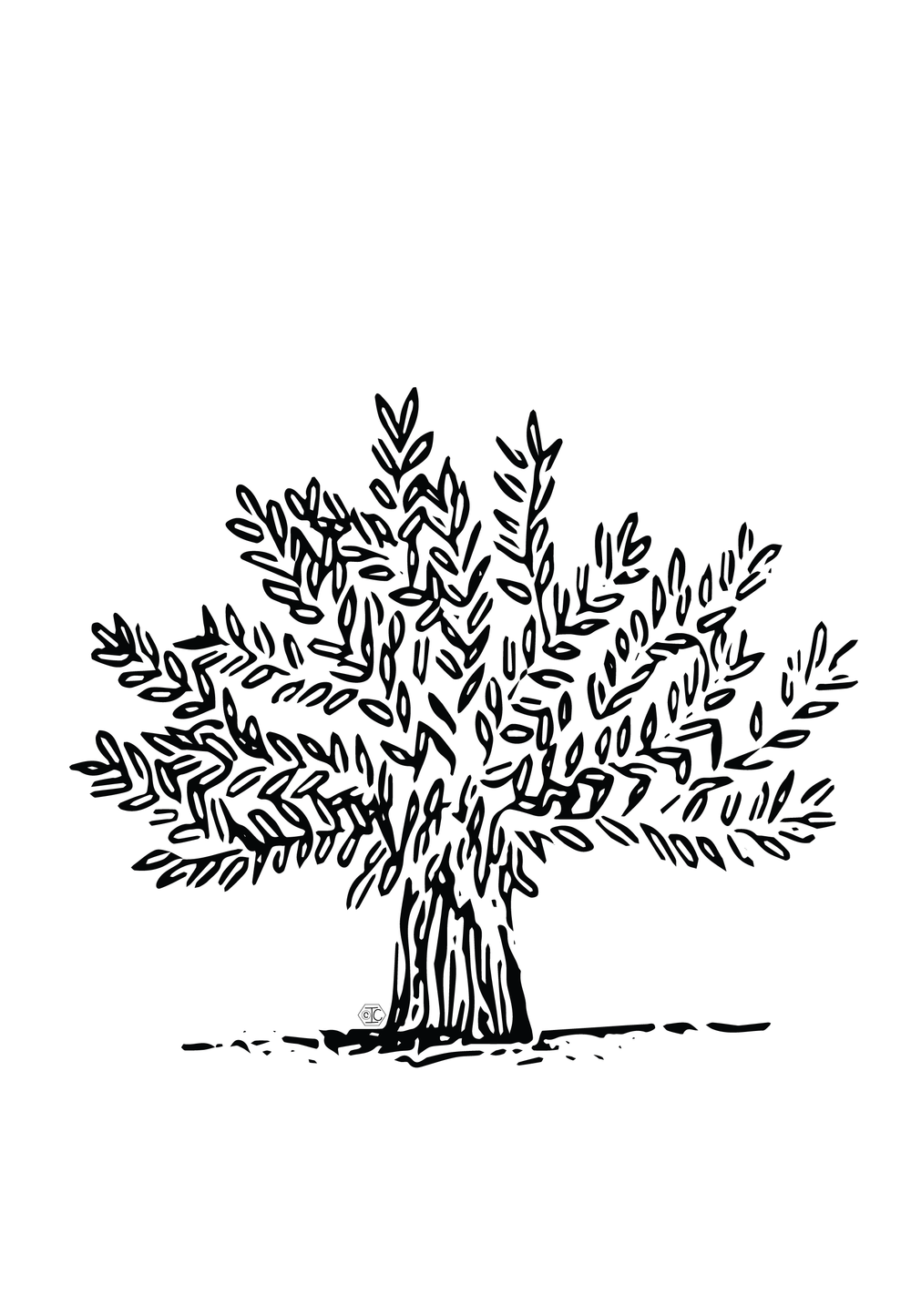 Olive Tree_CARD 900x1300px.png